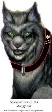 Spacecat First Mangy Fur.jpg