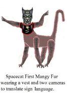 Spacecat First Mange in Vest.
