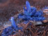 Bluegleam