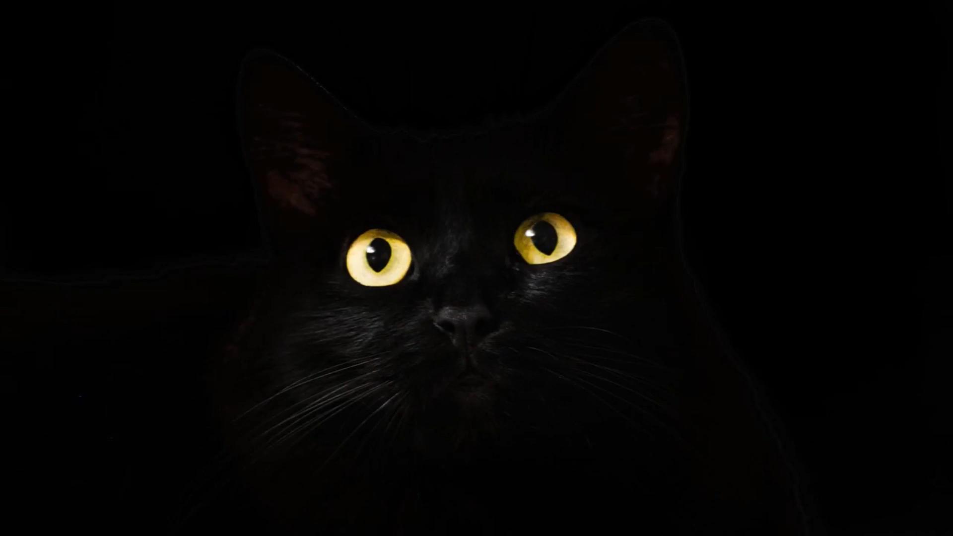 Cat Huxley