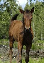 Foals need help;-)