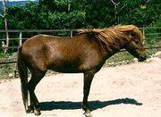 Noma-Pony-Horse.jpg