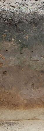 Profil glebowy.jpg