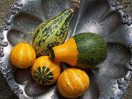 Gourds - grown in the garden
