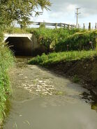 Water pollution in the Wairarapa