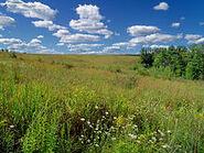 Flickr - Nicholas T - Prairie Walk (3)