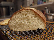 Italian Bread - Crumb.jpg