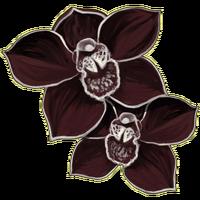 Schwarze Orchidee.png