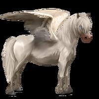 Neufundland Pony