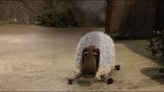 HtSaDTA-Sheep