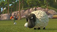 DF - Leyla grabbing an egg near the sheep