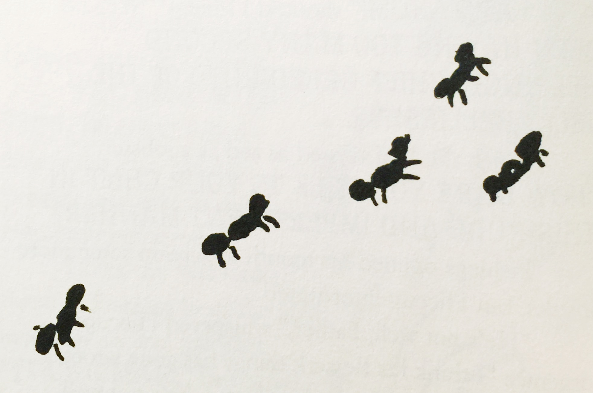 Ant (Books)