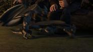 Baby Razorwhip 42