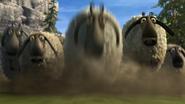 Flock of sheeps 3