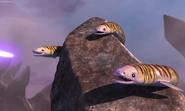 Eels3