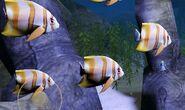 SOD-ShipGraveyard-StripedFish3