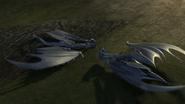 Baby Razorwhip 16