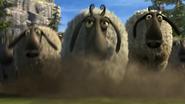 Flock of sheeps 4