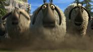 Flock of sheeps 8