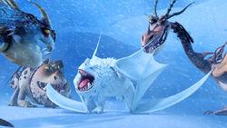 Snow wraith gallery 2.jpg