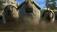Flock of sheeps 6