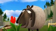 Sheep SD Cinematic 6
