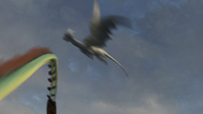 Female Razorwhip 46