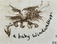 WindwalkerBaby