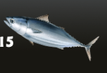 Tuna Dragon Pets