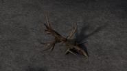 Buckthorn 1
