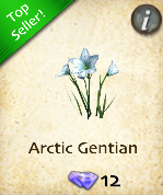 Arctic Gentian
