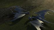Baby Razorwhip 21