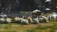 Animal House-Sheep2-5