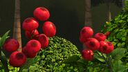 HA - Another close up on berry bushes