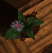 Flower in SoD 3