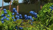 HA - More berry bushes