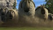 Flock of sheeps 5