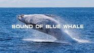 Sound Of Blue Whale