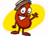 Bean 47