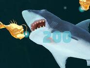 Great white Eating Angler Fish