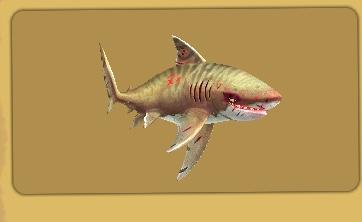 Evil Tiger Shark