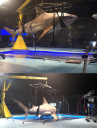 Shark-on-set-x2