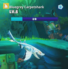 Bluegrey Carpetshark