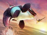 Killer Whale (HSW)