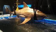 Shark-on-Set-Side-Skew-e1507728348916