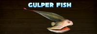 Gulper Fish