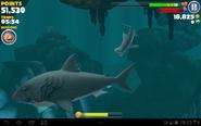 Tiger shark vs enemy megalodon