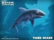 Tiger Shark Banner