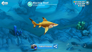 New Blacktip Reef Shark