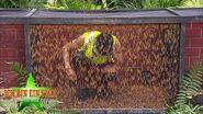Dschungelcamp 2020 Dschungelprüfung Hör mal, wie behämmert!